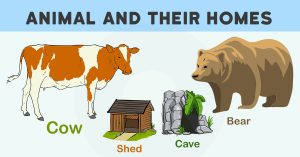 Animal And Their Homes With Pictures, Download Pdf & PPt
