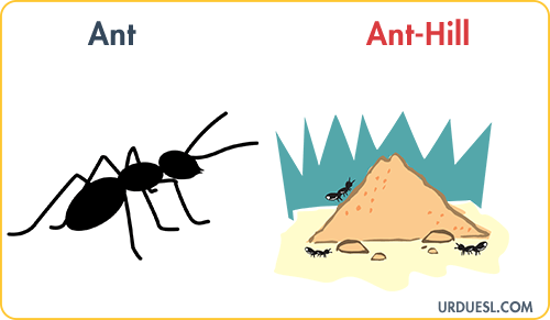 Ant Lives In Ant-Hill, Animal And Their Homes