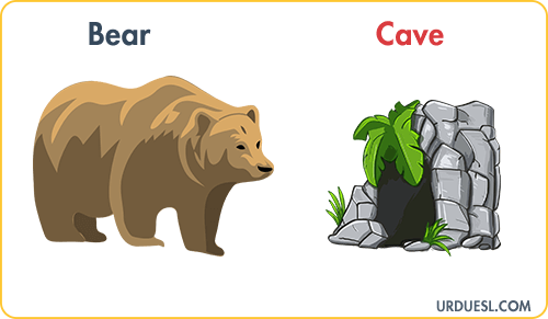 Bear Lives In Cave, Animal And Their Homes