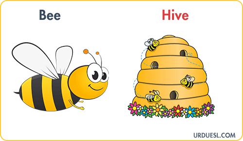 Bee Lives In Hive, Animal And Their Homes