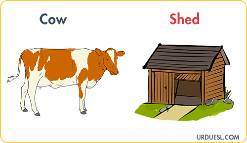 Cow Lives In Shed, Animal And Their Homes