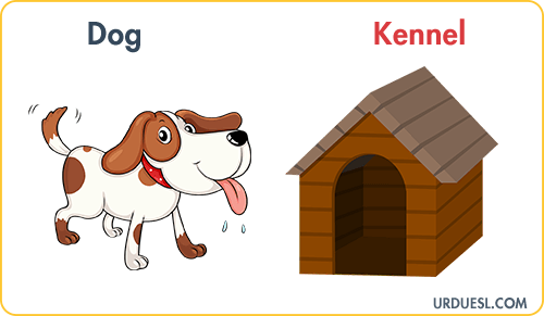 Dog Lives In Kennel, Animal And Their Homes