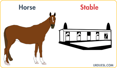 Horse Lives In Stable, Animal And Their Homes