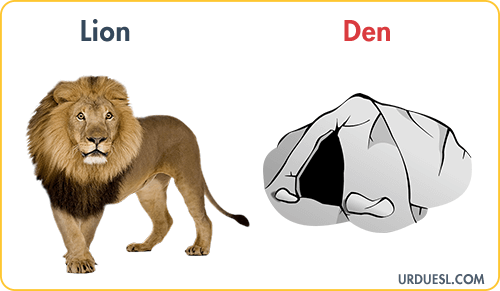 Lion Lives In Den, Animal And Their Homes