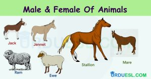 Masculine and Feminine Gender of Animals List – Ultimate Gender List