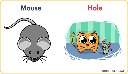 Mouse Lives In Hole, Animal And Their Homes