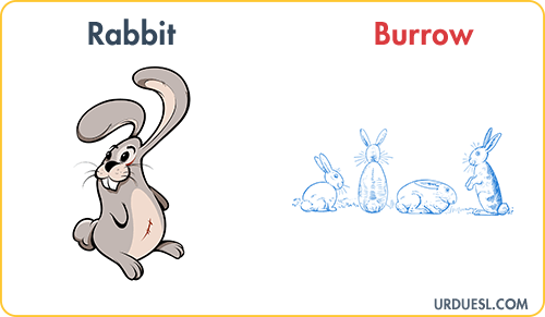 Rabbit Lives In Burrow, Animal And Their Homes
