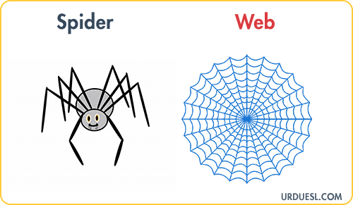 Spider Lives In Web, Animal And Their Homes