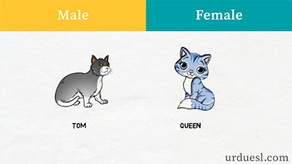 masculine and feminine of cat,Male And Female Of Animals