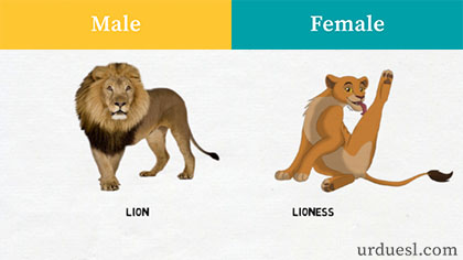 masculine and feminine of lion, Male And Female Of Animals