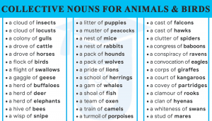 Read more about the article List of 70+ Collective Nouns for Animals and Birds