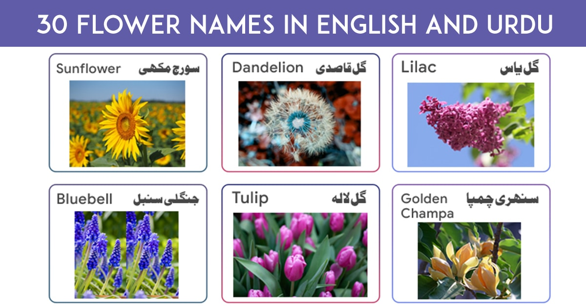 List of Flowers Name in English and Urdu with Pictures – Download PDF