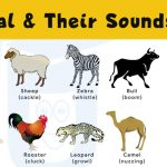 Sounds Of Animal And Birds – Ultimate List