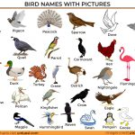 A to Z Bird Names List in English with Pictures – Download in Pdf