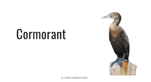 image of cormorant