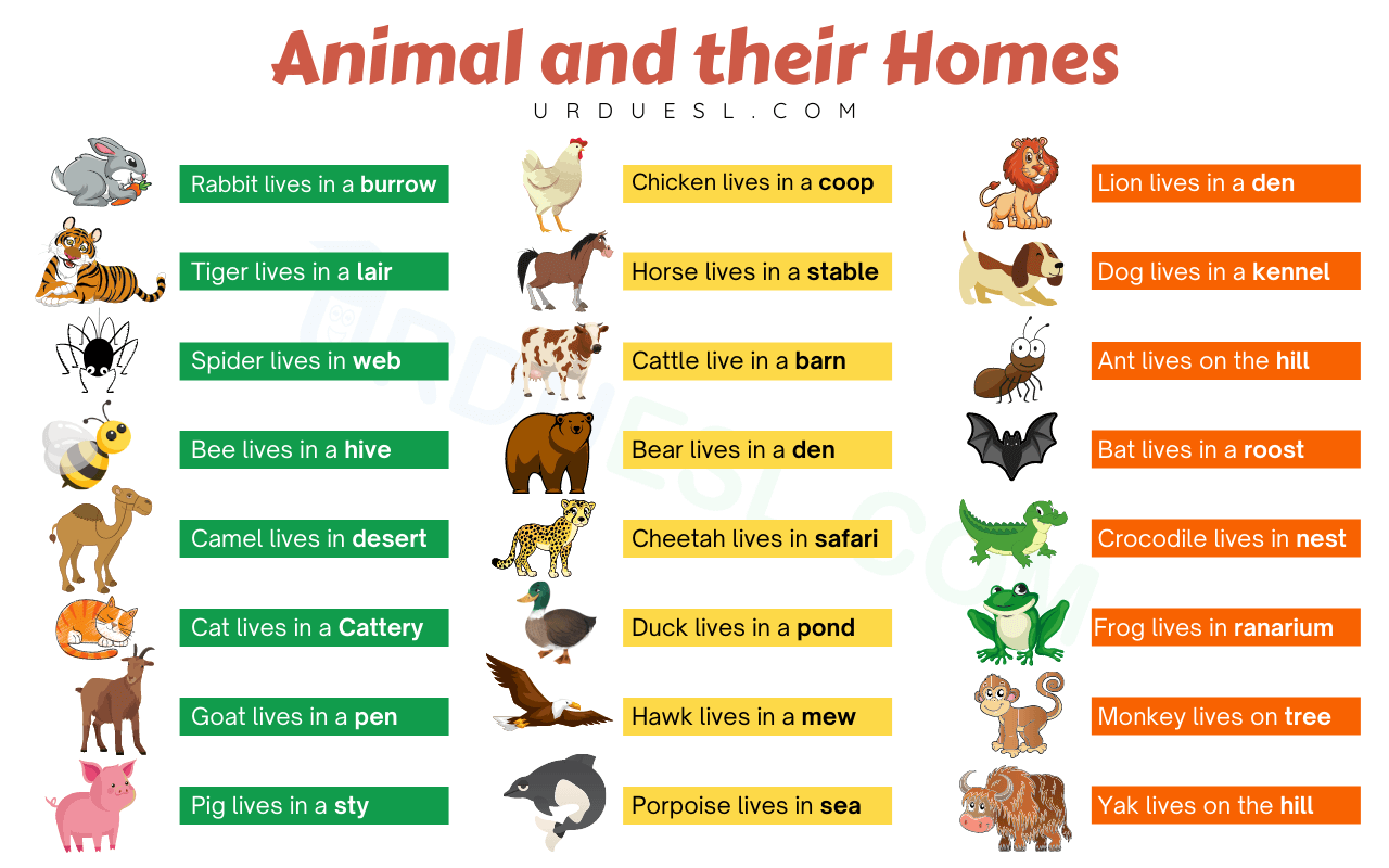 Read more about the article Homes of Animals with Names and Pictures – Download pdf